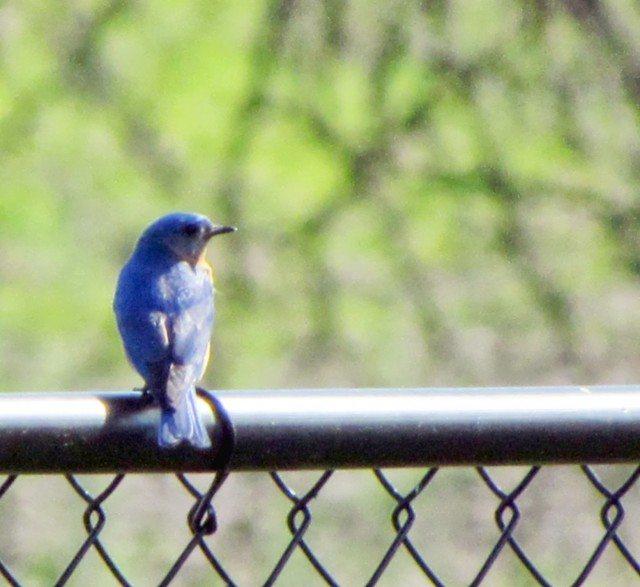 bluebird, sadness