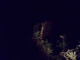 giraffe-at-night